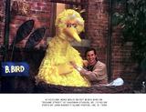Big Bird Photo - Big Bird