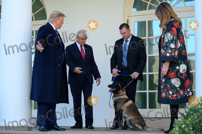 Photo - Conan the United States Army dog that assisted in the raid that killed ISIS leader Abu Bakr al-Baghdadi